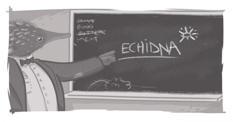 An image of an Echidna teacher at a blackboard.