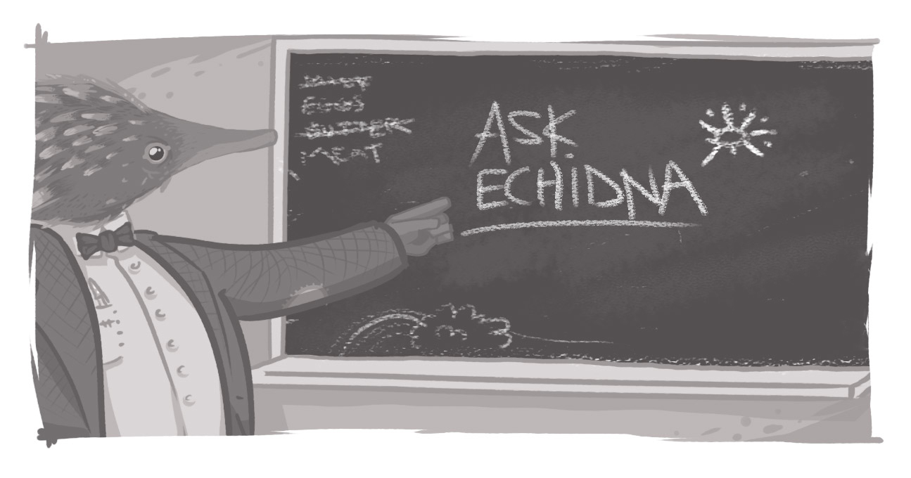 "An Echidna teacher pointing to the term ""Ask Echidna"" written on the blackboard."