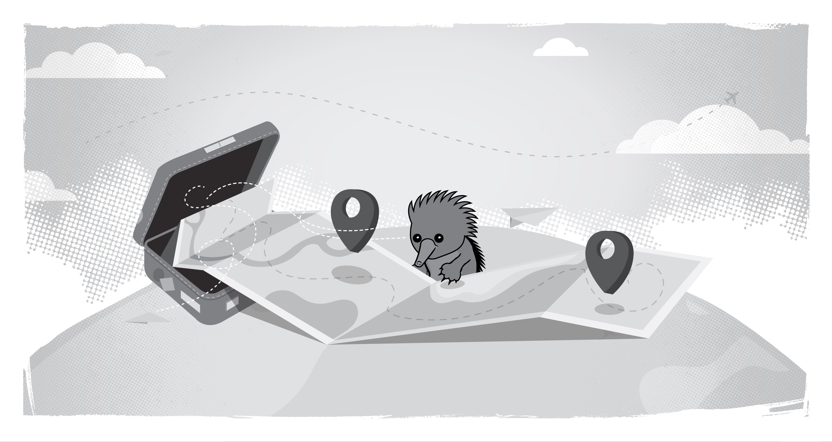 Echidna looking at a map