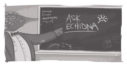 "An image of a professorial echidna at a blackboard that reads, ""Ask Echidna"""