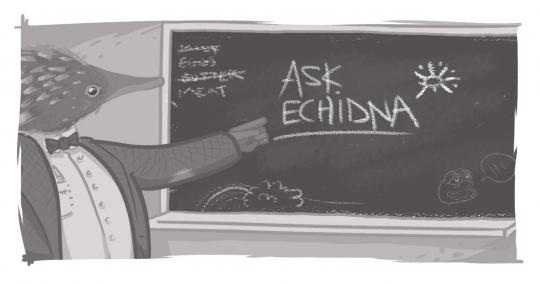 "An image of an Echidna at a blackboard that reads, ""Ask Echidna."""