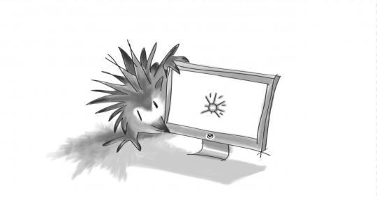 Echidna looking at a desktop monitor