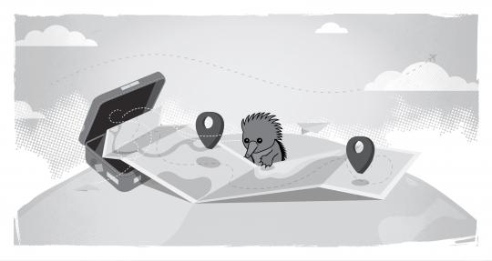 Echidna looking at map, with a suitcase